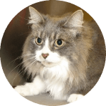 Companion Veterinary Hospital testimonial-Bandy cat