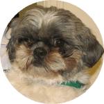 Companion Veterinary Hospital testimonial-Frisbo dog