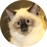Companion Veterinary Hospital testimonial-Gus cat